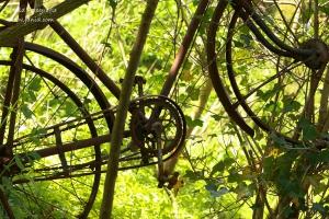 Roestige fiets in het stadspark